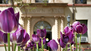 Image of purple flowers in front of Brown Hall